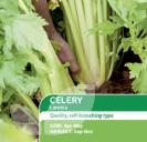 Celery Loretta