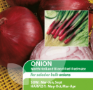 Onion North Holland Blood Red Redmate