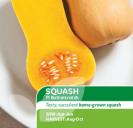 Squash F1 Butterscotch