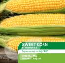Sweet Corn Moonshine F1