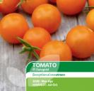 Tomato F1 Sungold