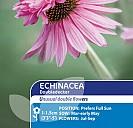 Echinacea Doubledecker