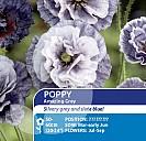 Poppy Amazing Grey