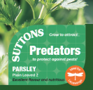 Parsley Plain Leaved 2 Predators