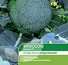 Broccoli F1 Gemini