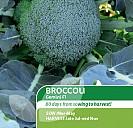 Broccoli F1 Gemini