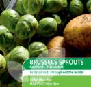 Brussels Sprouts Bedford Fillbasket