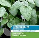 Lemon Balm Mandarina
