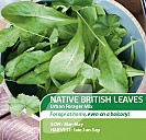 Native British Leaves Urban Forager Mix