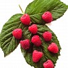 Raspberry Collection 2 Saving £2.00