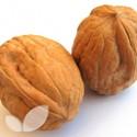 Walnut Buccaneer