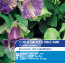 Cup & Saucer Plant